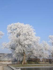 Drzewo przy stawie niedaleko dworku